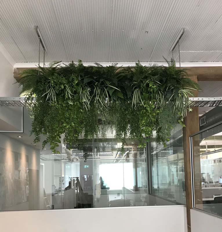 Happy Auto Sales >> Office Plants