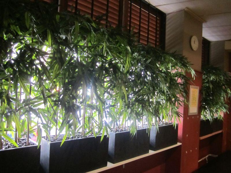 Screening Plants