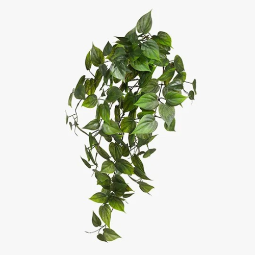 Philodendron Hanging Bush (UV)|