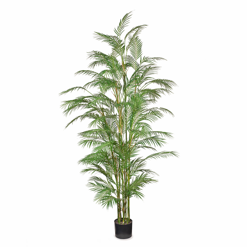 Phoenix Palm H229cm|Natural looking Palm, perfect for cluster displays or as a stand alone feature.